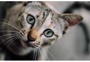 Pour savoir comment faire cohabiter un chien et un chat, rendez-vous sur catapart.fr